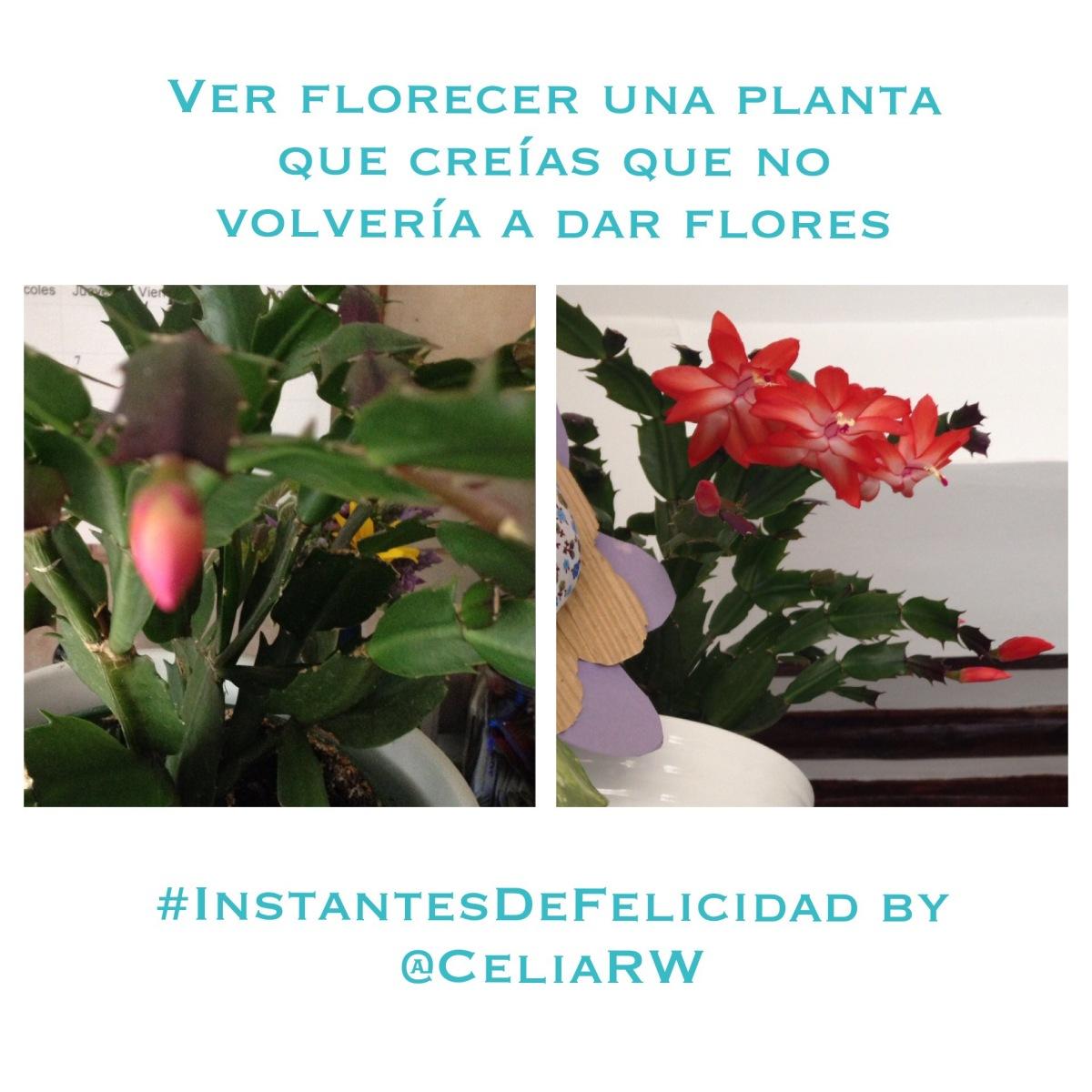 La felicidad cotidiana es ver florecer una planta