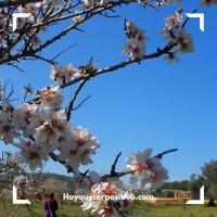 La felicidad y los almendros en flor de Ibiza