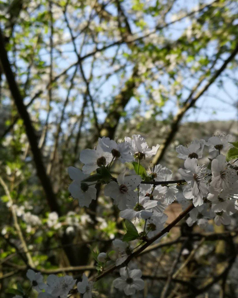 Primavera, ven a mí